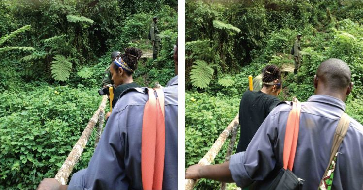 Trekking through the lush Rainforest