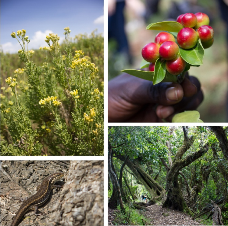 Collage of the beauty and variety of nature on Mt.Moroto
